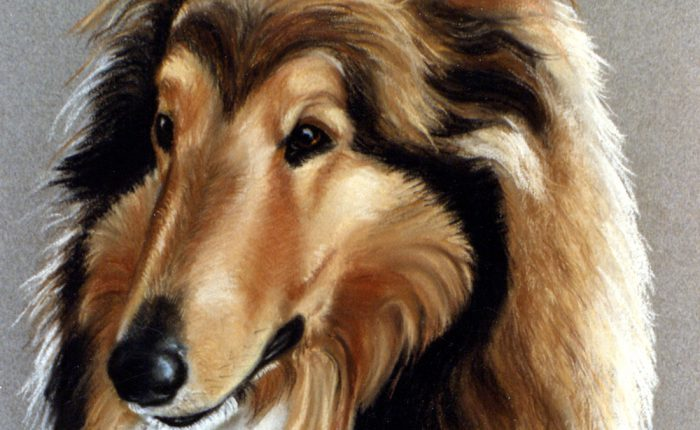Linda Champanier pastel drawing of collie