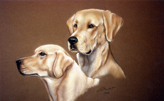 Linda Champanier pastel drawing of yellow labs