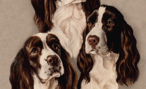 Linda Champanier pastel drawing of springer spaniels